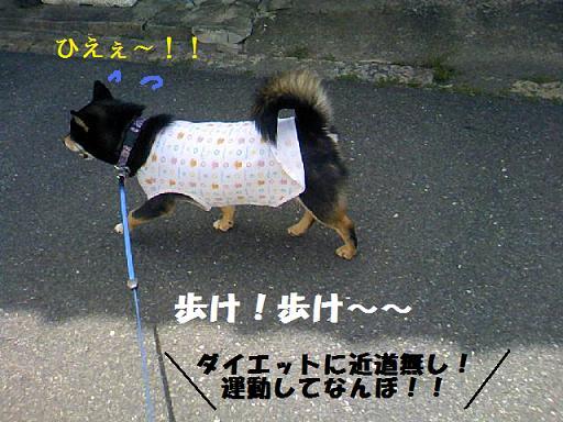 DCF_0052_20100627010020.jpg