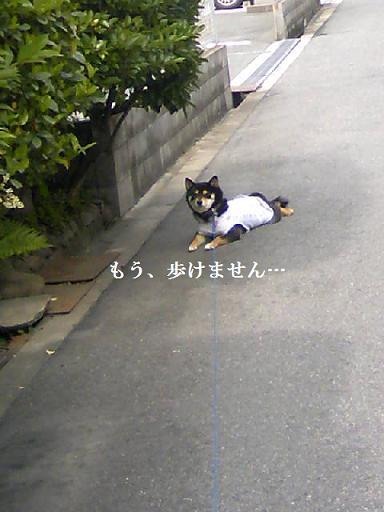 DCF_0062_20100627010019.jpg