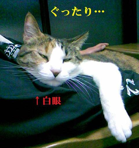 DCF_0068_20100403175026.jpg