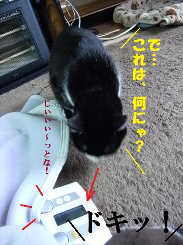 DSCF1377_20100309174050.jpg