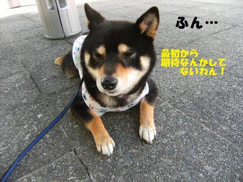 DSCF1883_20100610015343.jpg