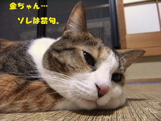 DSCF2246_20100819132555.jpg