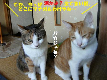 DSCF2275_20100901122424.jpg