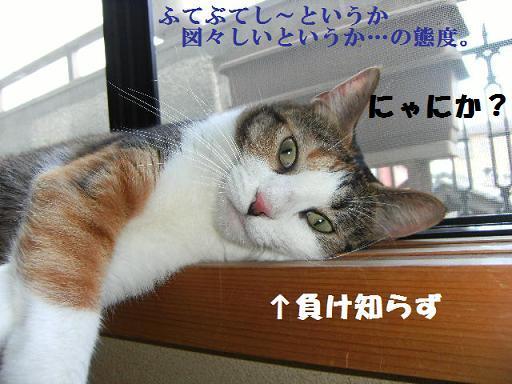 DSCF2300_20100914120055.jpg
