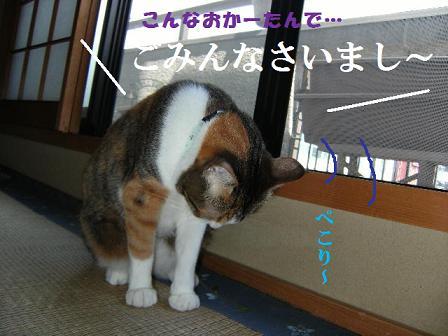 DSCF2302_20100901122423.jpg