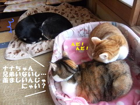 DSCF2510_20101126134736.jpg