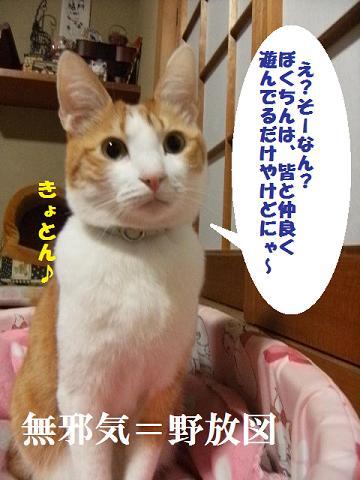 DSCF2841_20110616121307.jpg
