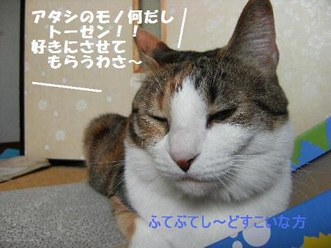 DSCF2914_20110430004629.jpg