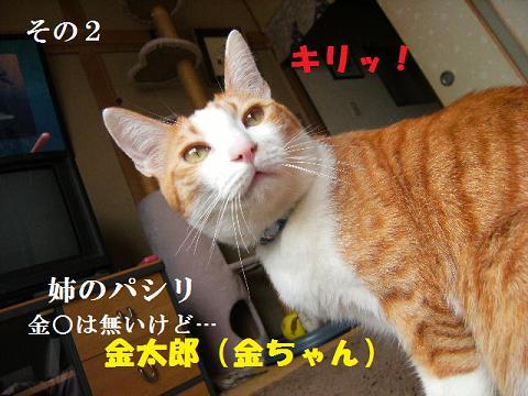 DSCF2946.jpg