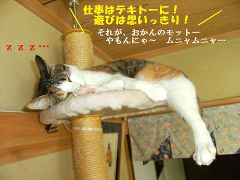 DSCF3347_20110822024750.jpg