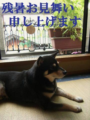 DSCF3359_20110822021120.jpg