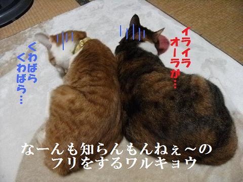 DSCF36981.jpg