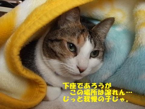 DSCF3746_20111222014542.jpg