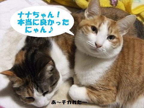 DSCF3841_20120119140247.jpg