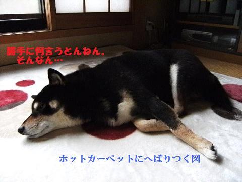 DSCF3885_20120122143132.jpg
