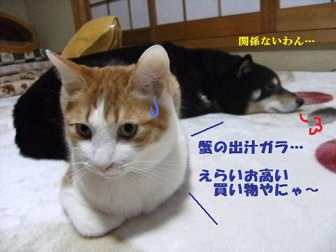 DSCF3985_20120305011452.jpg