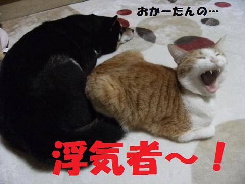 DSCF3987_20120214013841.jpg