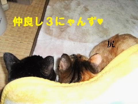 DSCF4013.jpg
