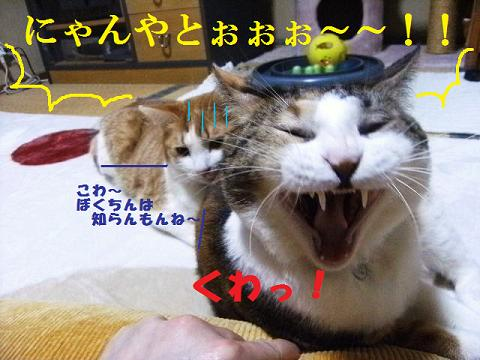 DSCF4029_20120226234008.jpg