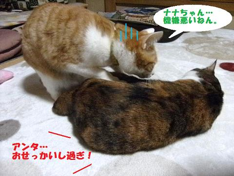 DSCF4034_20120306044650.jpg