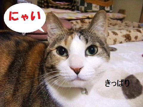 DSCF4040_20120308000318.jpg
