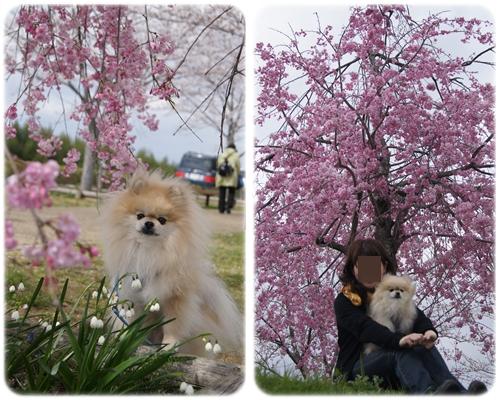 cats_20130405234058.jpg