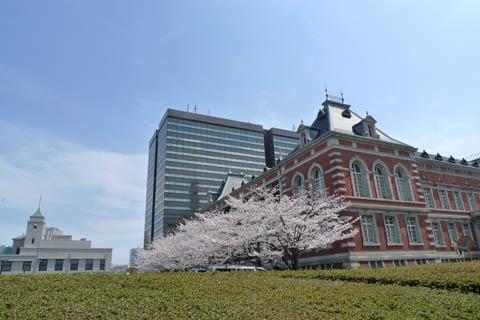 法務局と桜