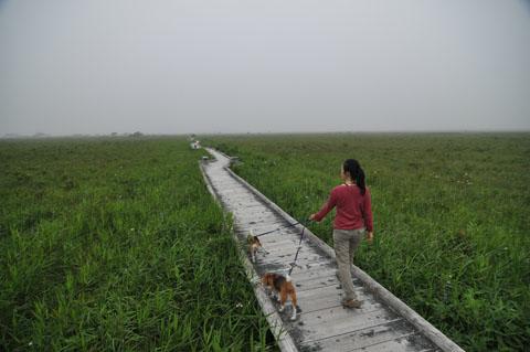 霧多布湿原木道1