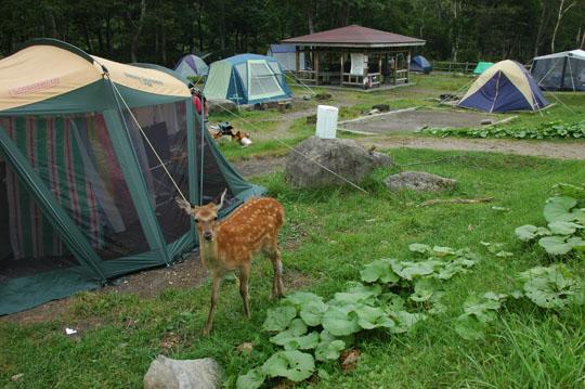 動物追加 キャンプ場鹿