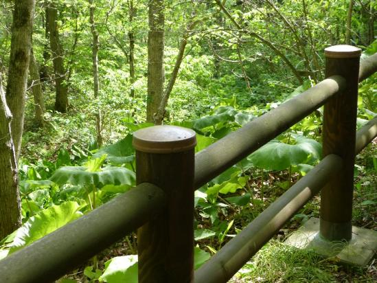 遊歩道の木柵