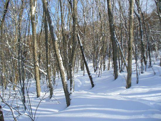 雑木林の斜面