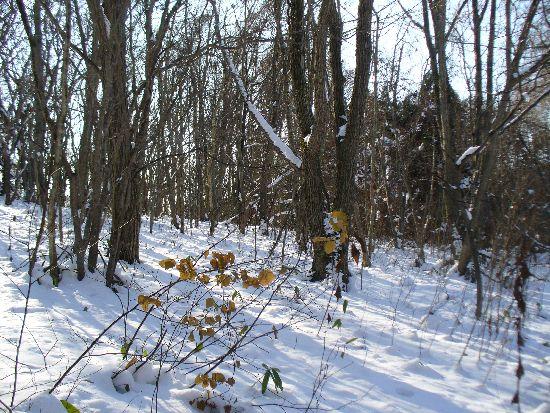 初冬の雑木林