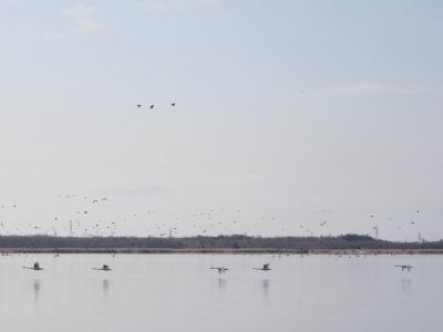 66.ウトナイ湖