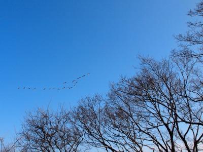 65.ウトナイ湖