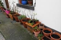 gardening1114