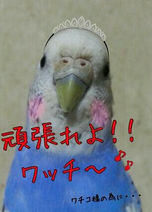 fc2_2013-12-01_09-32-00-669.jpg