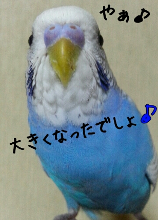 fc2_2014-01-18_22-40-08-099.jpg