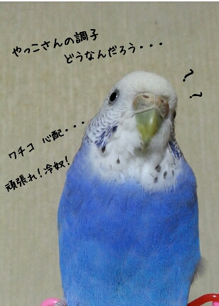 fc2_2014-01-24_09-28-46-435.jpg