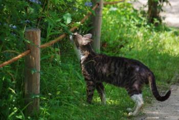 猫も好きな花の香り