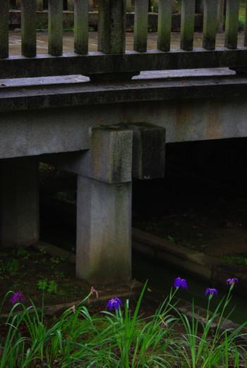 橿原神宮 花ショウブ
