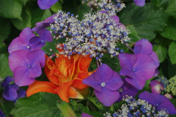 薮萱草と額紫陽花