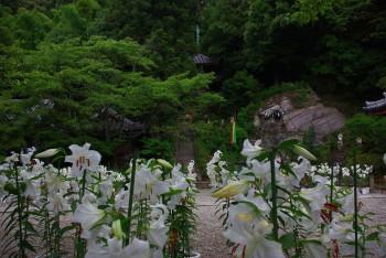 ゆり松尾寺境内1