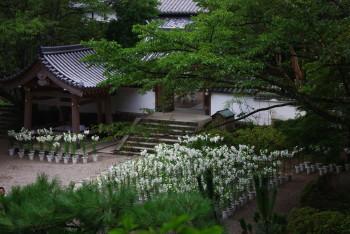 ゆり松尾寺境内