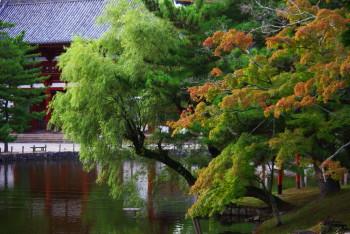 奈良公園鏡池