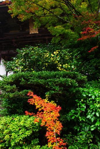 円城寺山門