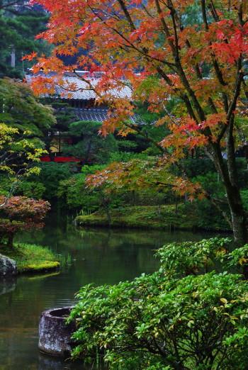 円城寺紅葉