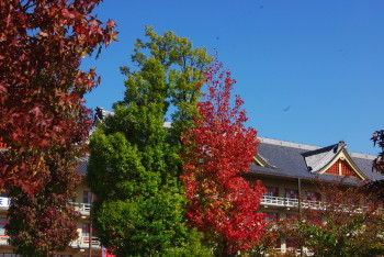 天理街路樹2
