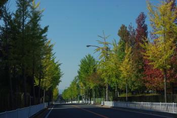 天理街路樹3