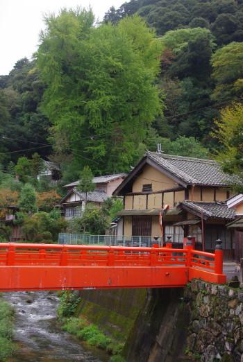 長谷寺銀杏2