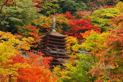 談山神社2011